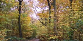 Autumn_foliage_at_Haigh_Woodland_Park_in_Greater_Manchester